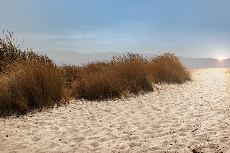 scenic view of beach access Perspectives On Nature Beach Beauty In Nature Corsica Day Desert Grass Landscape Marram Grass Nature No People Outdoors Sagon Sand Sand Dune Scenics Sky Tranquil Scene Tranquility Water