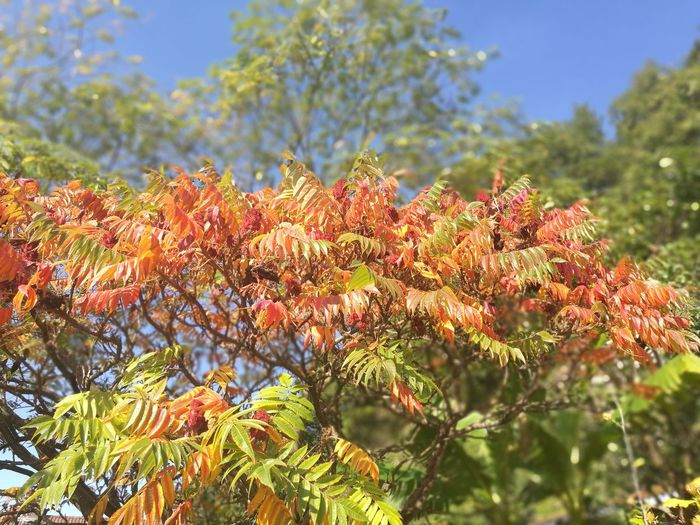 Nature Plant Outdoors Beauty In Nature No People Flower Day Green Color Tree Springtime Leaf Growth Close-up Freshness Sky