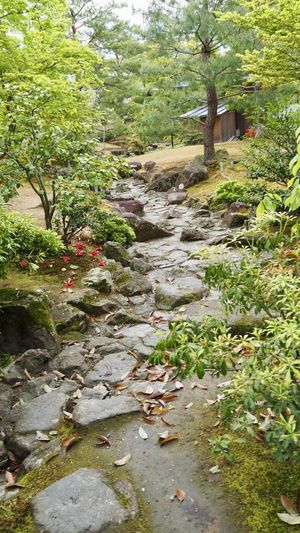 Plants growing in stream