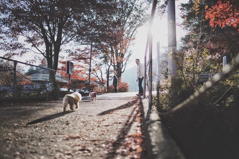 Vscocam Light And Shadow Japan Streetphotography Snap Bokeh Animal Themes Animal Mammal One Animal Domestic Domestic Animals Pets
