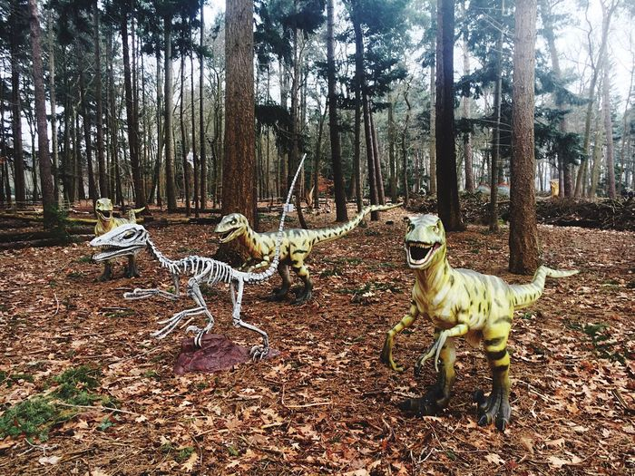 Tree Animal Themes Mammal No People Nature Forest Day Outdoors Domestic Animals Dinosaur Skeleton