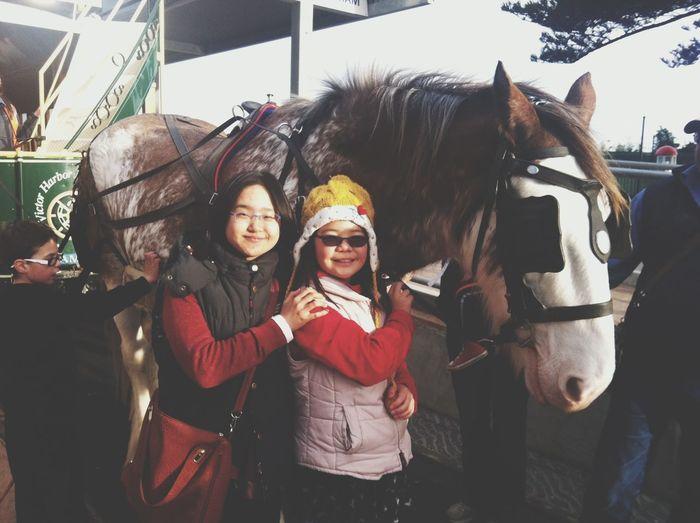 Having Fun Horse Smile