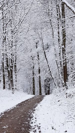 Snow Winter Nature Outdoors Tree Silence Silence Of Nature