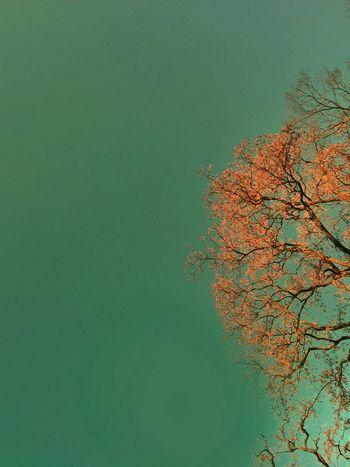 Spring Tree Abstract Wallpaper