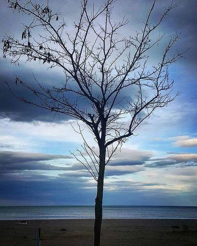 Deniz…Alabildiğine mavi… Huzur verir insana hayat verir ,mutluluk verir.Bide o dalga sesleri yok mu insanı alır götürür olabildiğince huzurlu bir yere.Bir taşın üzerine oturup ayaklarını denize daldırmak ve suyla oynamak,balıkların o ahenkle oradan oraya savruluşlarını izlemek,denizle dalgaların sesiyle hayallere,düşüncelere dalmak gibisi yok. Yaşayacakların sana deniz gibi saf gelir ve bu sana huzur verir. Bazen ise kitabını açıp başka insanların hayatlarına dalarsın.Müzikler eşlik eder sana.Dalagaların yarışı , müziğin sesi , denizin saflığı, maviliği ,kitabın konusu ve renkler bazen her şeyden daha önemli olabilir. Deniz Instagrammers Big_shotz Visko Benimkadrajim A Kum Kiş Instagood Instagrm Insatalike Smiles