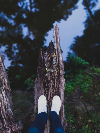 wandering One Person Low Section Adult People Outdoors Day Forest Nature Tree Beauty In Nature Close-up Minimal Minimalistic Simplistic Travel Investing In Quality Of Life