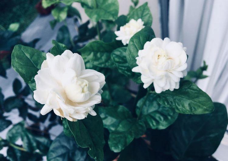 Flower for