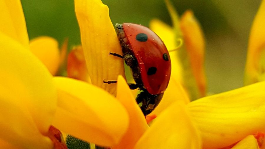 I insectos