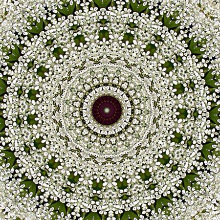 Queen Anne's Lace (kaleidoscope edit) 👉🏻 https://youtu.be/FhmeroR20lc Flowers The Flowers Series Playing With Edits Beauty In Nature Nature_collection Patterns In Nature From My Point Of View For My Friends That Connect