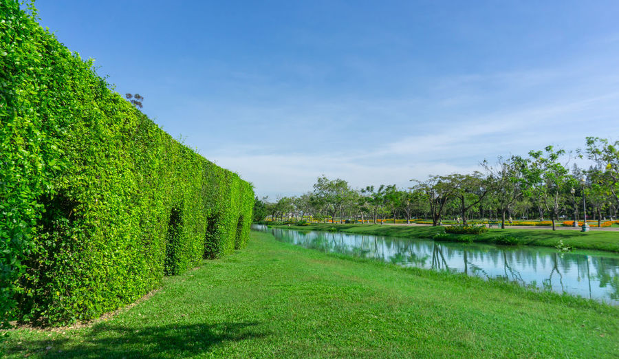 Green wall of