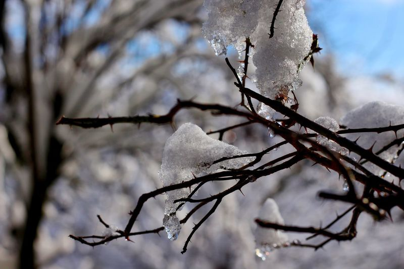 Close-up of frozen bare tree during winter