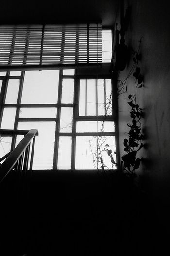 Can U See The Meaning Of Life? In This Scene It's About Windows And Flowers .. Blackandwhite Black And White Black&white Black & White Blackandwhite Photography Black And White Photography Soul Eyes Lifestory Sky Life Style Free Alone True Story New Eyes Flowers Windows Nature Should Be Here MJ028