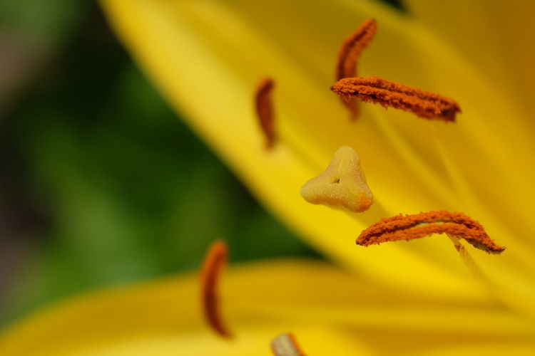 Flower Head Flower Yellow Insect Close-up Animal Themes Plant