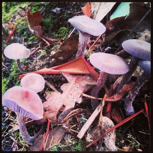 Mushroompatch PNW PtDefiancetrails