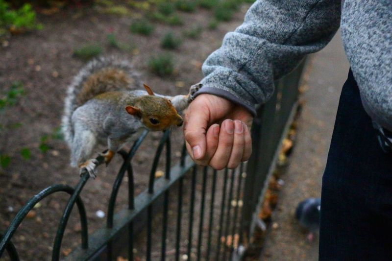 High angle view of squirrel touching hand at park