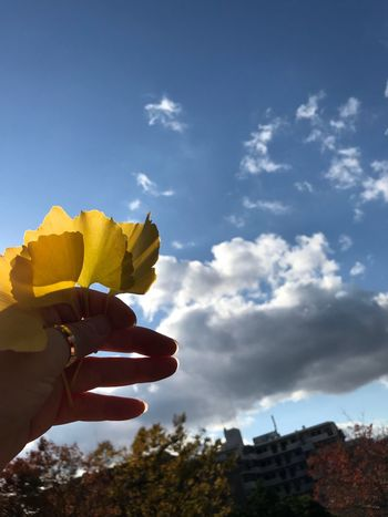 Human Hand Human Body Part One Person Human Finger Real People Holding Sky Personal Perspective Cloud - Sky Day Low Angle View Outdoors Lifestyles Close-up Tree People