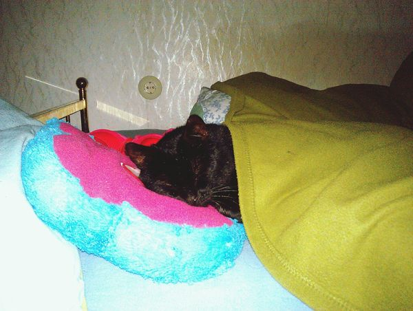 Cat Goodnight World