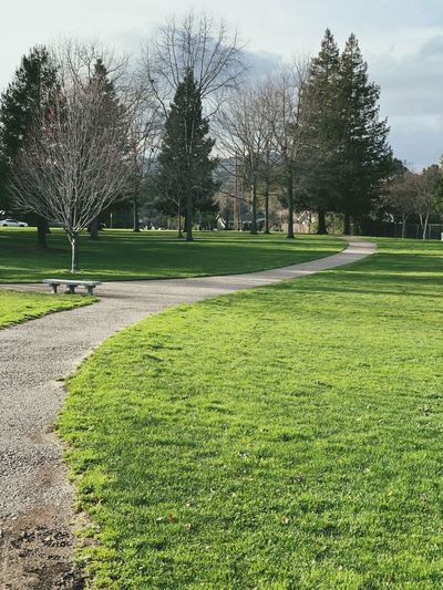 """I'll Meet You In The Middle"" A lone bench, calling to be shared, at a cross path in a local city park in Northern California. Lonely Park Bench Green Grass Trees Path Walking Path Walkway City Park Tree Grass Green Color Nature Day No People Outdoors Park Beauty In Nature Park - Man Made Space Tranquility"