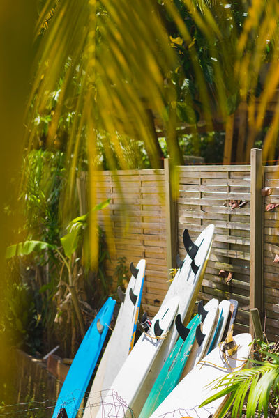 Surfboards in a row.... Surfboards Row Surfcamp Learn Hang Loose ✌ Chill Relaxing Caribbean Caribbean Island Leasure Activities Hanging Out Surf Travel Vacation Swimming Tropical Beach House Surfers Home Bayside House Bayside Surfers Paradise Water Palm Tree Tropical Tree Shore Boat Coconut