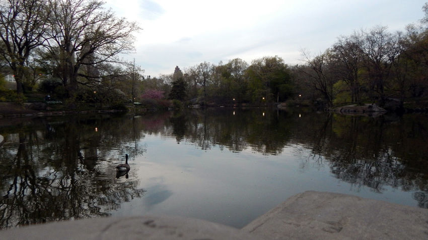 Andrevieira Central Park CentralPark EyeEm Gallery Fotografering Férias Landscape Landscape_Collection Landscape_photography Natural Landscape Nature NY NYC NYC LIFE ♥ NYC Photography Photo Photografie Photographie  Photography Reflection Sky Tree Vocation Water Welcome Weekly