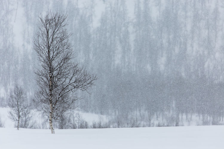 Beauty In Nature Cold Cold Temperature Covering Day Fog Foggy Landscape Nature Northern Norway Norway Power In Nature Snn Snow Snow Covered Steam Tranquility Tree Weather White Winter Landscapes With WhiteWall The Great Outdoors - 2016 EyeEm Awards