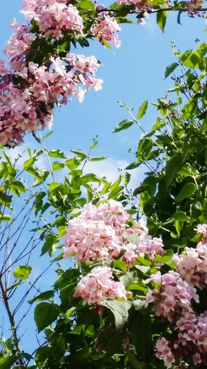Flower Water Pink Color Flower Head Sky Plant