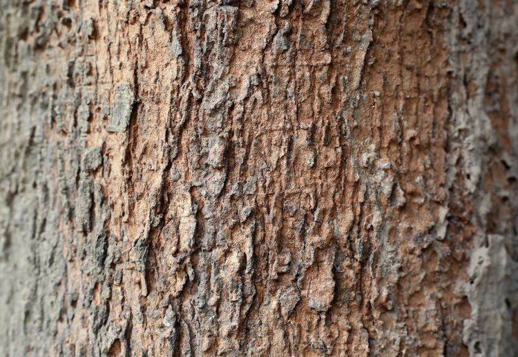 Blackground Nature Textured  Textured Effect Textures and Surfaces Tree Wood Art Backgrounds Brown Brown Texture Close-up Day Nature No People Outdoors Rough Texture Textured  Tree Texture Weathered Wood - Material Wood Texture Wood Texture Background Woods