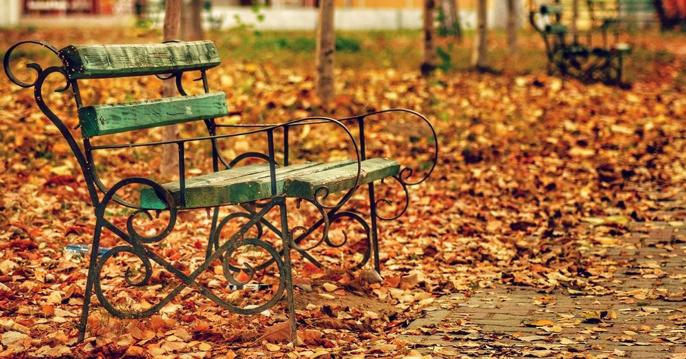 Empty seat in park during autumn
