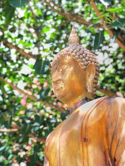 Buddha statue in the temple in Thailand Thailand Temple Thailand Temple Believe Buddhist Buddha Buddhism Art And Craft Statue Religion Human Representation Creativity Belief Sculpture