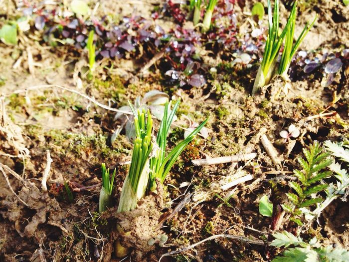 Plant Spring Springtime Spring Flowers Awakening Of Nature Awakening Growth Field Nature No People Close-up Fragility Green Color Outdoors Day Freshness Beauty In Nature Russia Leaves🌿 Leaves_collection Foliage Foliage, Vegetation, Plants, Green, Leaves, Leafage, Undergrowth, Underbrush, Plant Life, Flora Podmoscovye Moscow_region