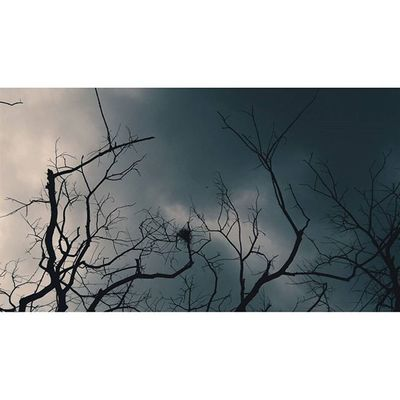 Take me to the clouds above Location - Streets, Mumbai, India IndiaJourney India Darkness Light Clouds Branches VSCO Vscocam Vscoindia Vscomumbai Mumbai Sky Blackclouds Explore Travel Traveldiaries Vscotravel Vscoexplore