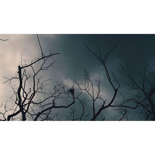 Take me to the clouds above Location - Streets, Mumbai, India IndiaJourney India Darkness Light Clouds Branches VSCO Vscocam Vscoindia Vscomumbai Mumbai Sky Blackclouds Explore Travel Traveldiaries Vscotravel Vscoexplore