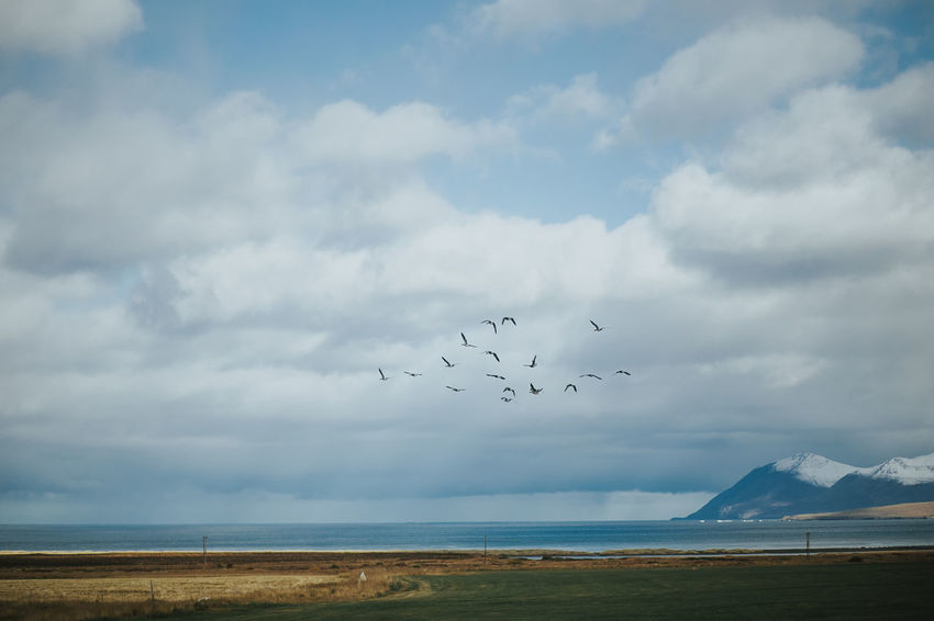 Iceland Animal Themes Beauty In Nature Bird Cloud - Sky Day Flock Of Birds Flying Horizon Over Water Large Group Of Animals Migrating Mountain Nature Outdoors Scenics Sea Sky Snowcapped Mountain Tranquil Scene Tranquility Travel Destinations