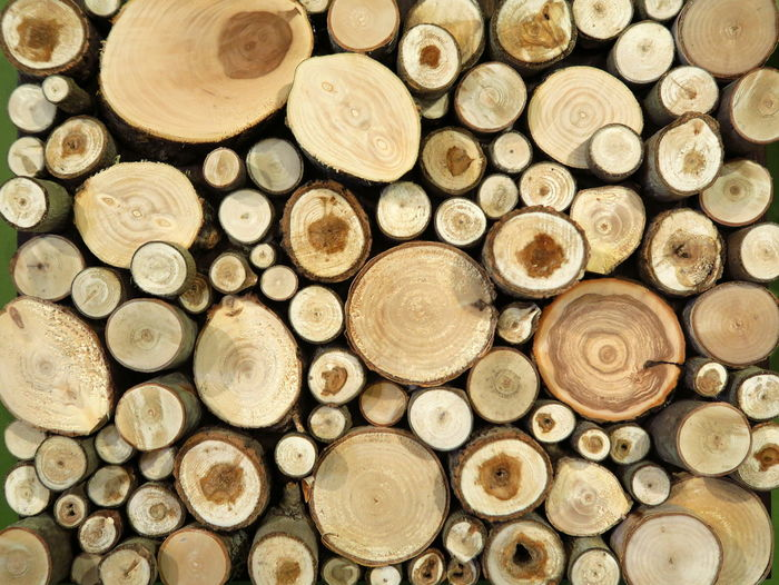 Painting Piles of Wood Large Group Of Objects Full Frame Forest Backgrounds Wood - Material Close-up Abundance No People Stack Wood Wood Piles Piles Of Wood Wood Pile Pile Of Wood Pile Cross Section Sections Section Lumber Industry Geometric Shape Woodpile Tree Ring Firewood Circle