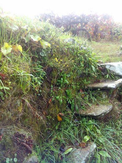 Natural steps Taking Photos Nature Natural Beauty