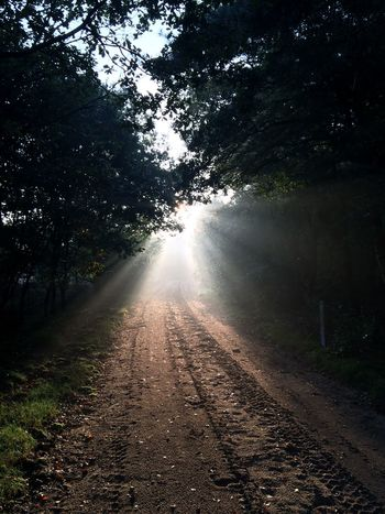 Beauty In Nature Branch Bright Day Footpath Growth Lens Flare Long Nature No People Non-urban Scene Outdoors Remote Scenics Sky Streaming Sun Sunbeam Sunlight The Way Forward Tranquil Scene Tranquility Tree Walk Into The Light