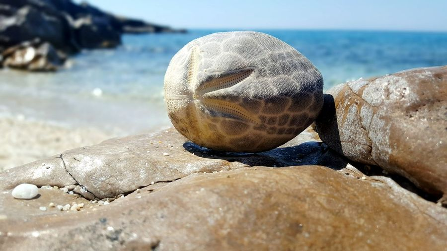 Close-up of turtle on beach