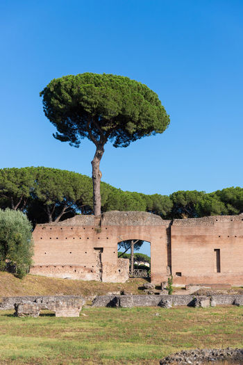 Tree Rome