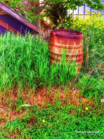 Atthefarm Series.... IPhoneography IntheCountry HDR