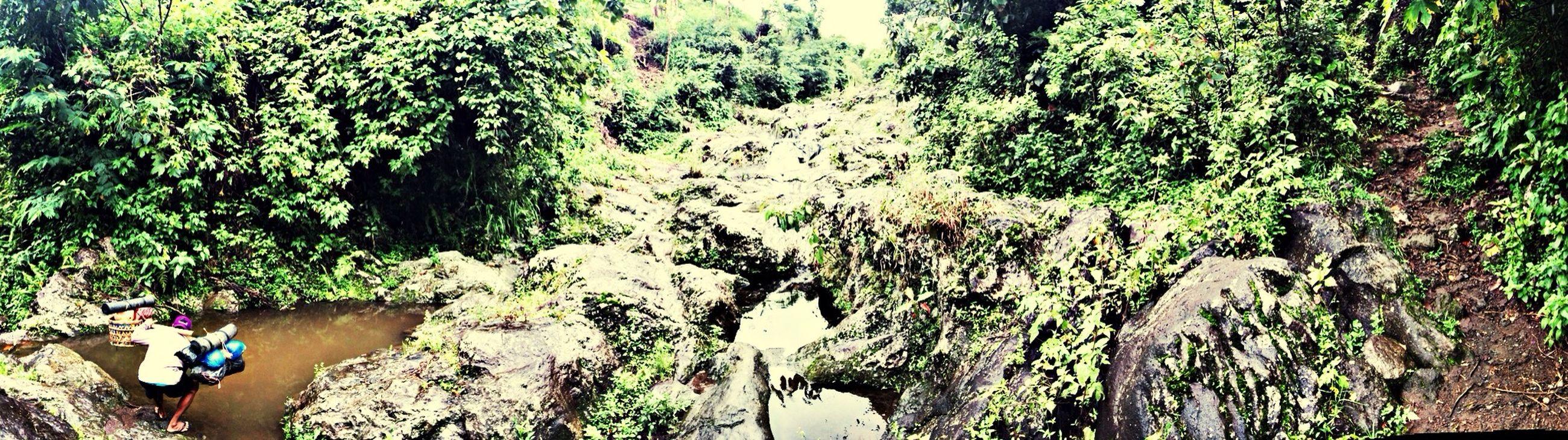 Trekking Jungle