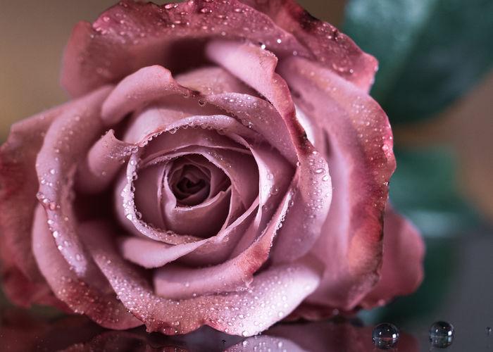 Rose Rosé Rose