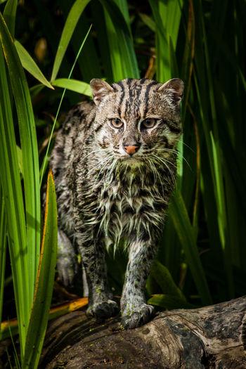 Portrait of alert cat on drift wood in forest