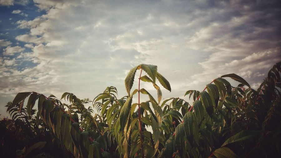 Plant Sky Close-up Cloud - Sky Plant Life