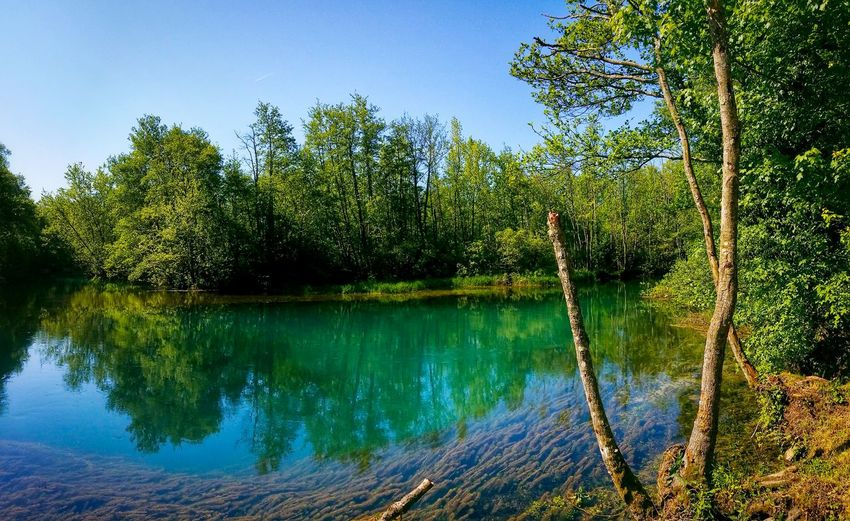 Santissima Springs Polcenigo Pordenone Friuli Venezia Giulia Italy Travel Photography Travel Voyage Traveling Mobile Photography Fine Art Panoramic Views Scenic Landscapes Nature Lakes  Water Flows Trees Transparency Reflections And Shadows Mobile Editing