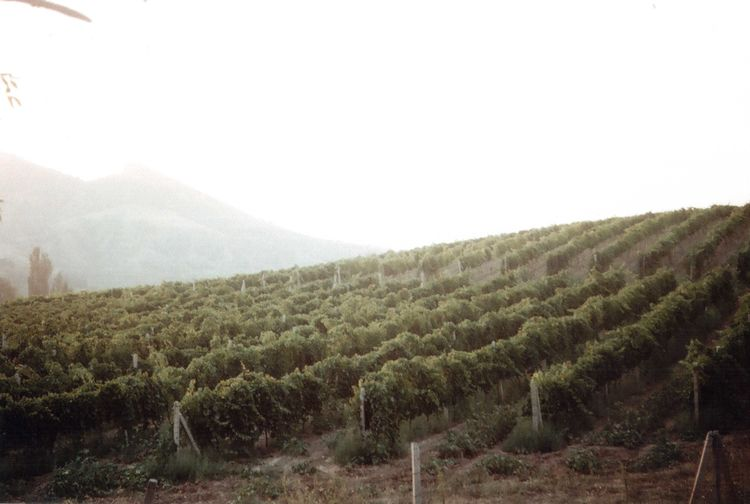 35mm Agriculture Crimea Cultivated Land Film Green Color Idyllic Landscape Mountain Nature Outdoors Plant Summer Summertime Sunset Travel Traveling Vineyard Zenit