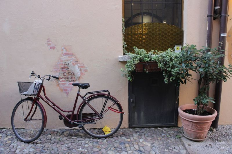 Potted plant and cycle by wall