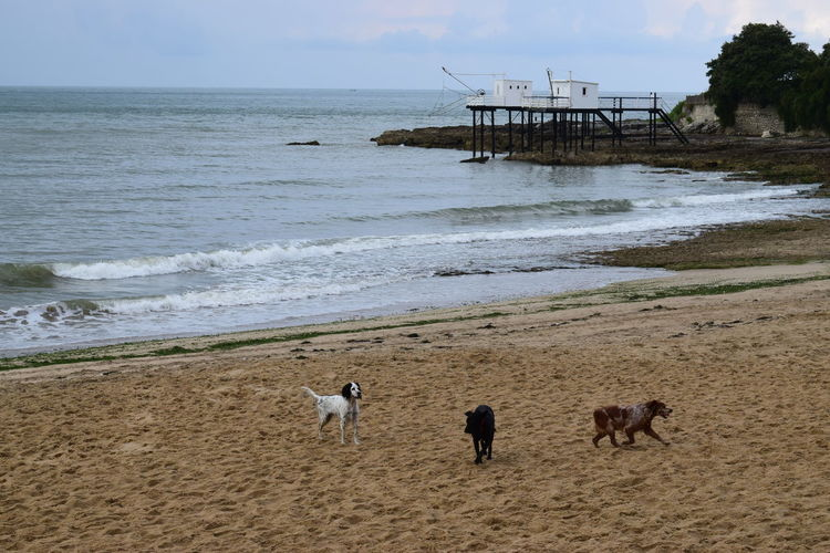 Dogs on sand at beach