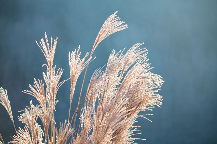 Close-up of plant against sky during winter