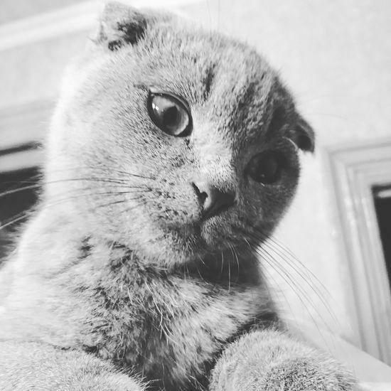 Cat Osman. Pets