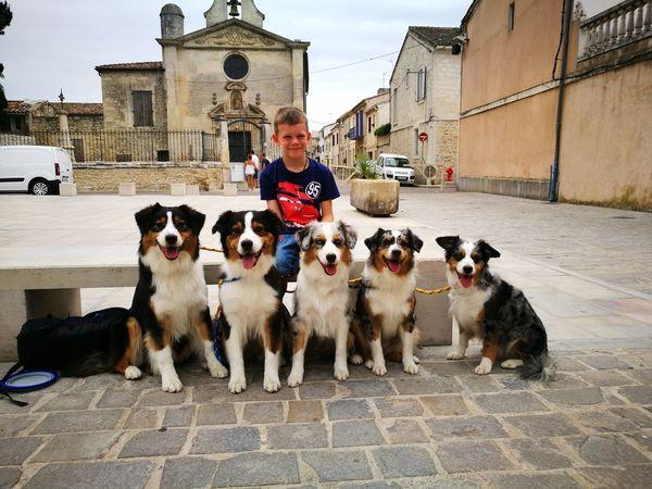 EyeEm Selects Pet Portraits Australianshepherd Aussies Dog Portrait